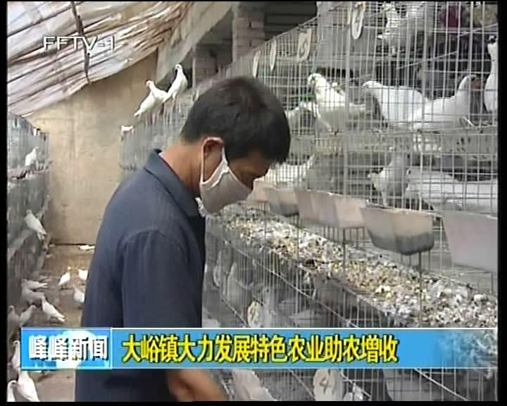 大峪镇大力发展特色农业助农增收