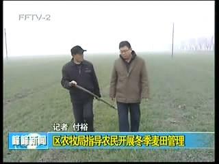 区农牧局指导农民开展冬季麦田管理